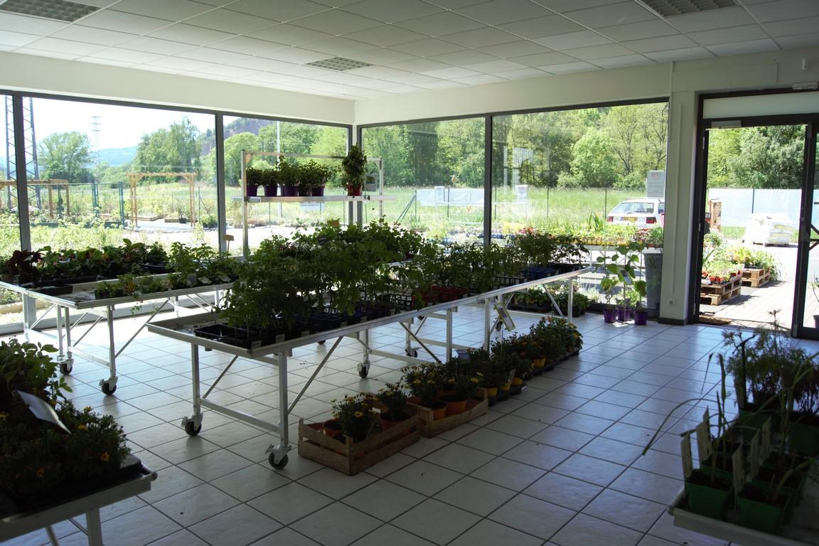 plants et replants chez PSM près de molsheim